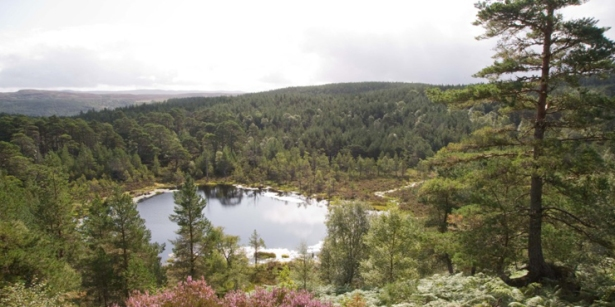 Native pine woodland in Glen Affric.